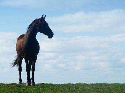 Centro Internazionale del cavallo: il Trofeo Giovanile Piemonte 20 e 21 Ottobre