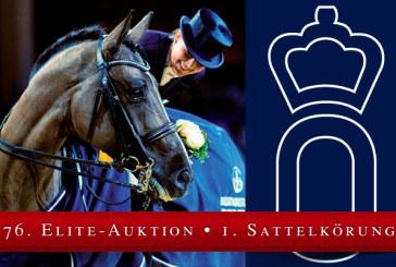 All'asta d'Elite Oldenburg per trovare il cavallo dei vostri sogni