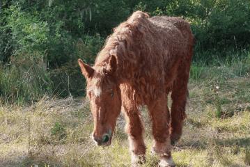 Il trattamento della sindrome di Cushing nel cavallo