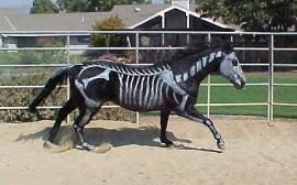Halloween al maneggio tra pony e zucche