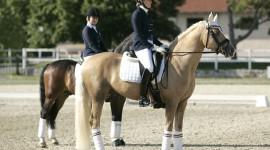 Gli azzurrini sono quinti a squadre agli Europei di dressage pony