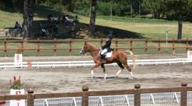 Campionato italiano pony dressage, partito