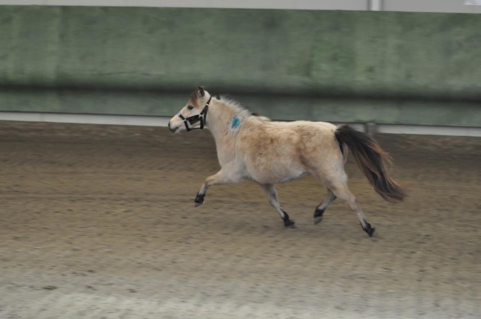 Un pony in palestra, un video da vedere
