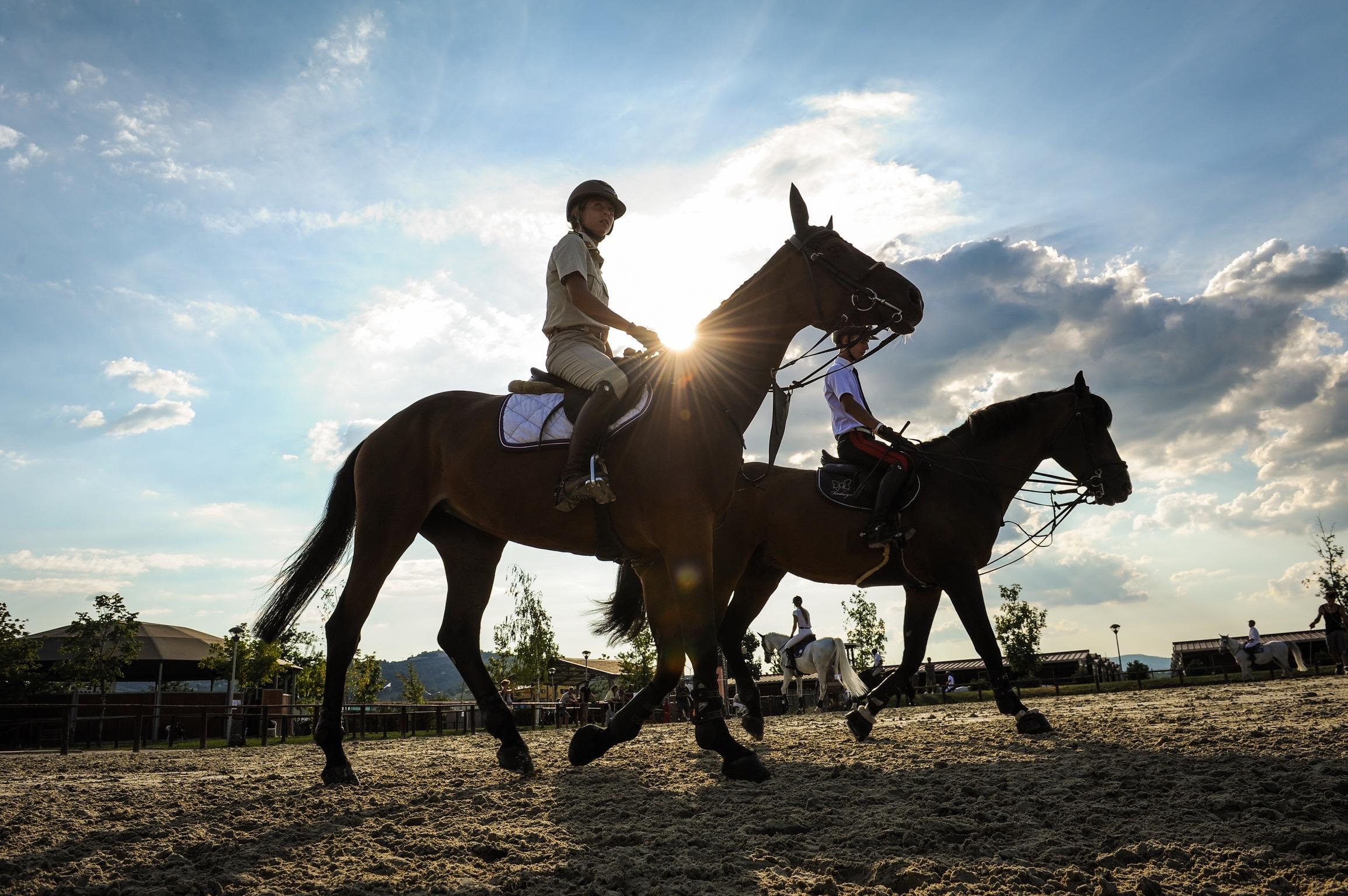 Horses Le Lame: Montefalco porta a Lanaken