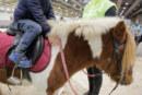 Fieracavalli Verona festeggia 120 anni: ecco come cambia la vita degli equini