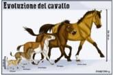 Chi era l'Eohippus, l'antenato del cavallo