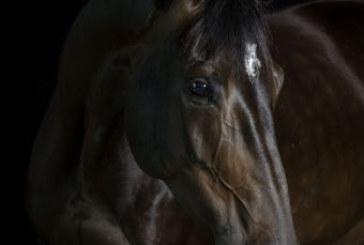 L'incuria del cavallo equivale al maltrattamento
