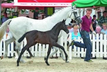 Appuntamento con il cavallo dei tuoi sogni all'asta Oldenburg