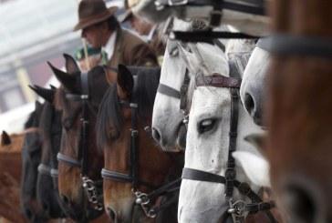 Fiera Cavalli Verona – Un percorso territoriale: dal cavallo alla cultura contadina