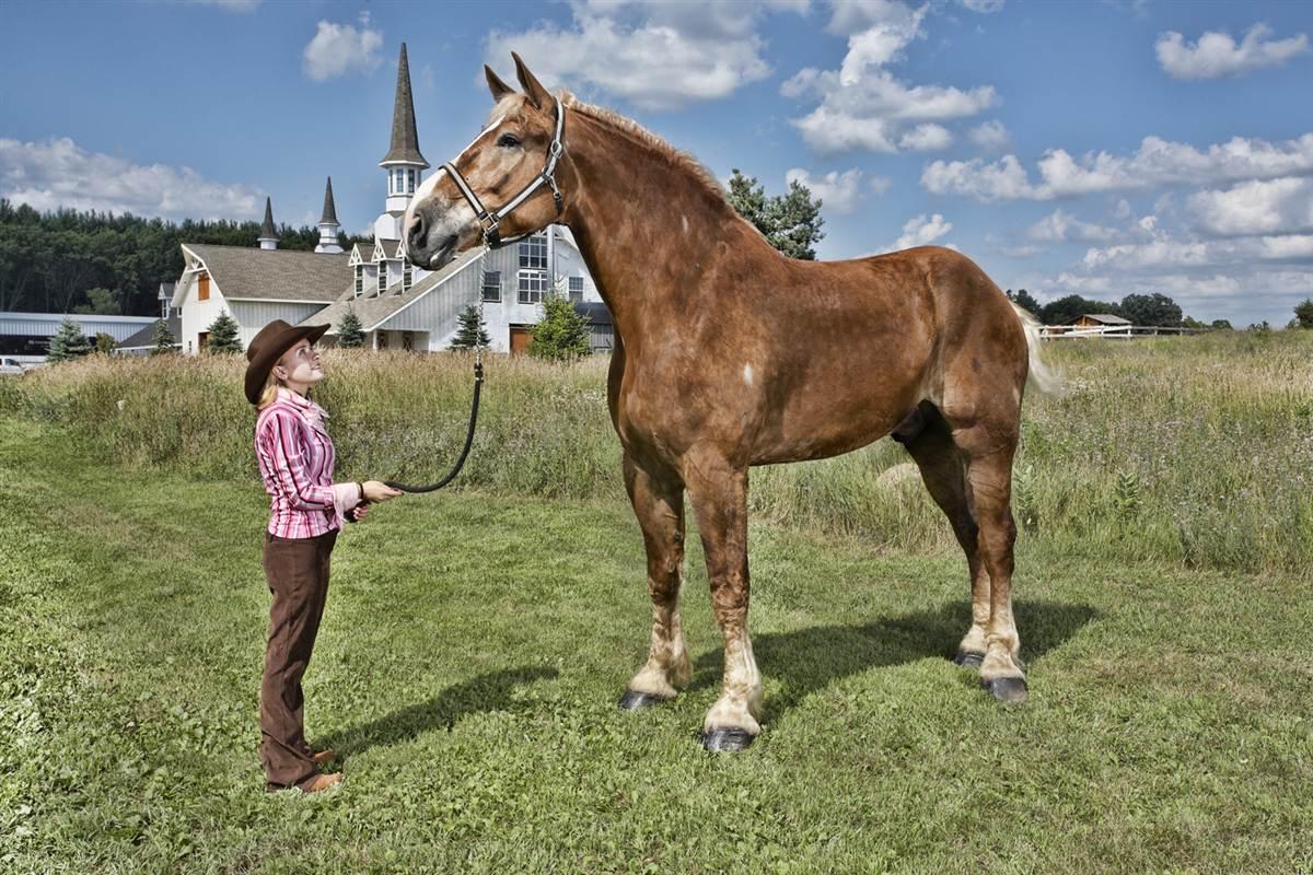Guinness World Record, è Big Jake il cavallo più grande