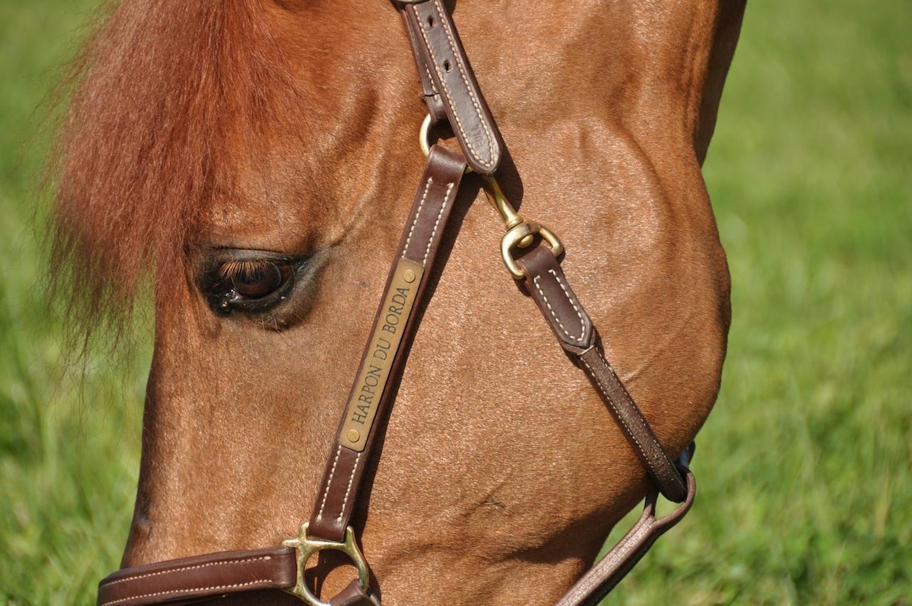 Come fotografare il vostro cavallo, segui il corso