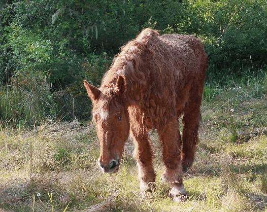 perdita di peso di cushing equino