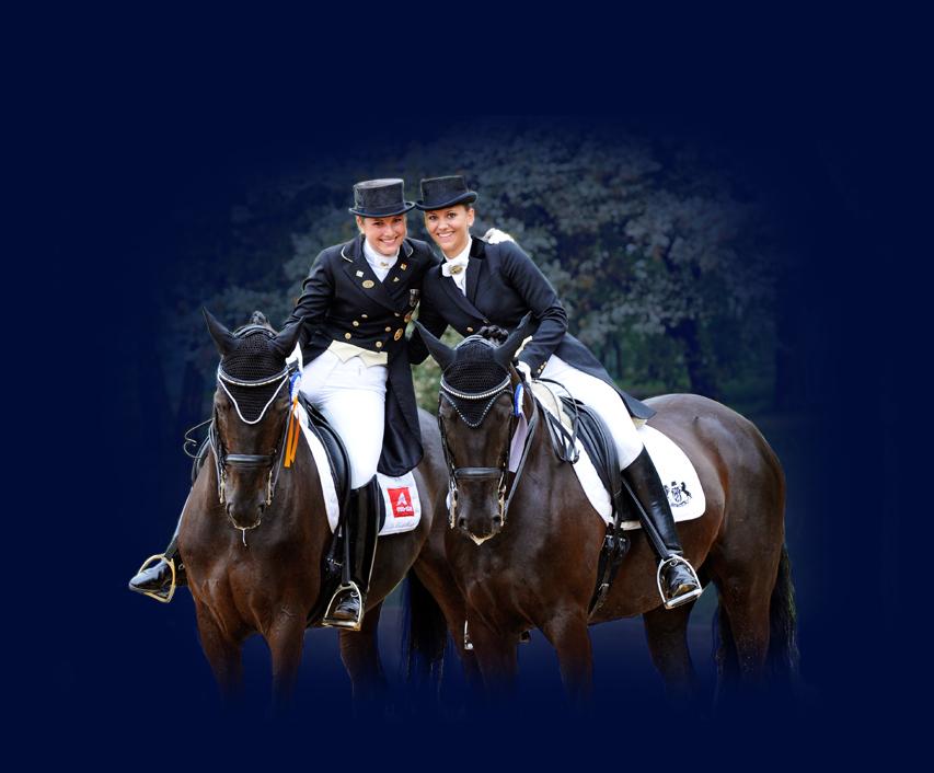 Asta cavalli Oldenburg: alla ricerca del campione