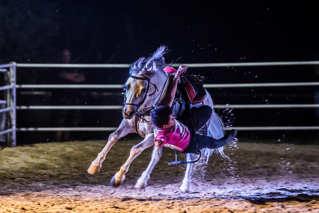 Mostra Nazionale del Cavallo Città di Castello