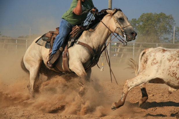 Cavalli a Roma: arriva il Cutting