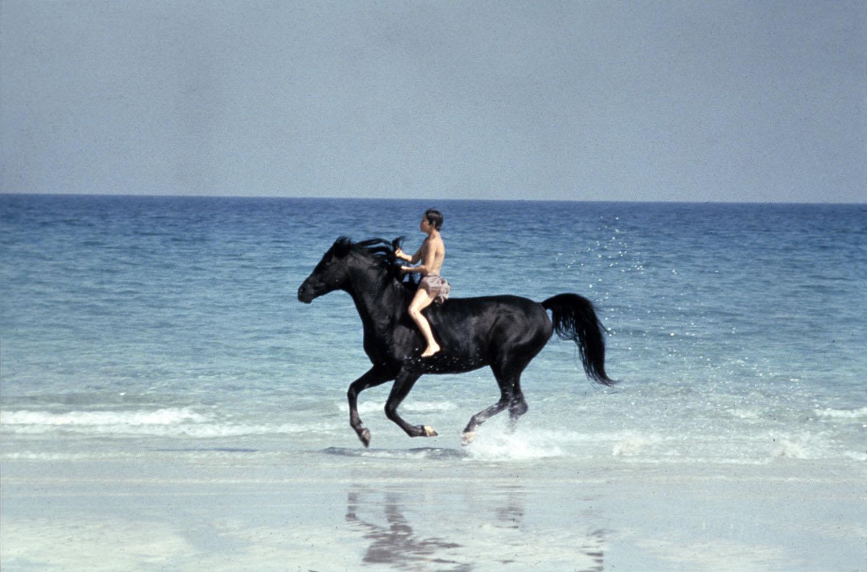 Film sui cavalli: i più belli di tutti i tempi