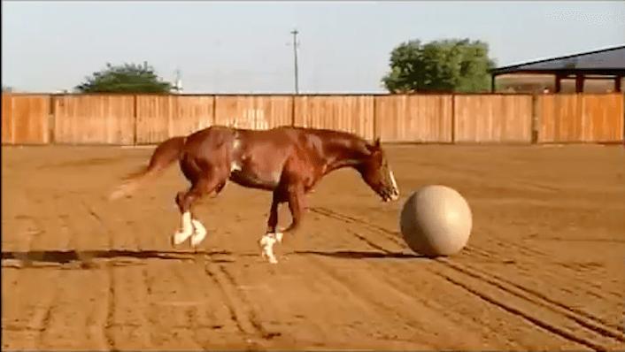 Un cavallo si dà al calcio, guardate il video