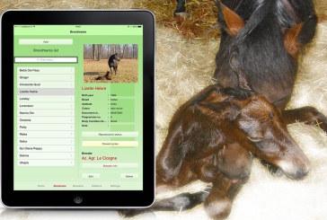 Cavalli e smartphone: 7 applicazioni per gli amanti dell'equitazione