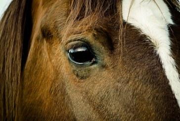 I cavalli comprendono le nostre emozioni? Sì, anche attraverso una fotografia