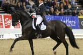 Viva Gold, nipote di Weihegold, comprata all'asta per 140.000 euro