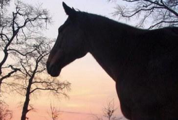Addio a Liscalgot, campionessa del mondo di Jerez de la Frontiera