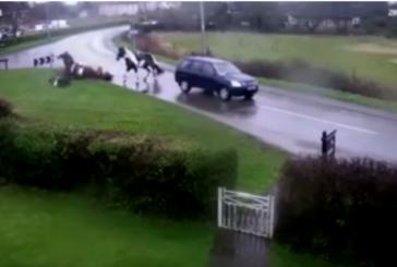 Spaventoso incidente stradale, una macchina sul lato sbagliato della strada investe due cavalli
